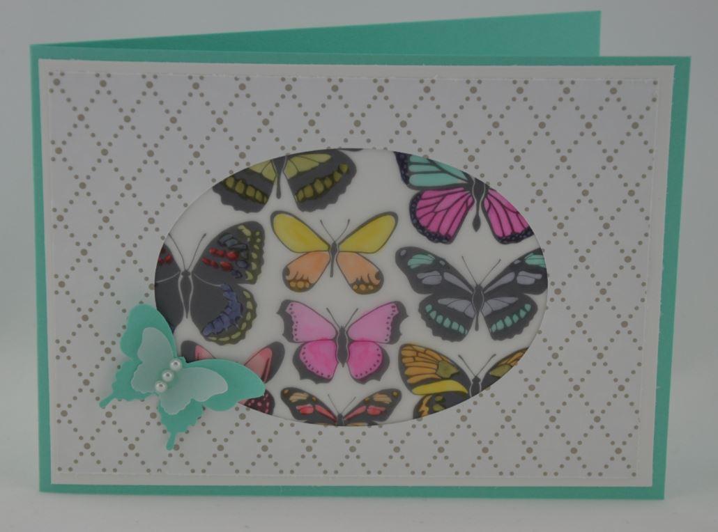 Schmetterlingsfenster 1