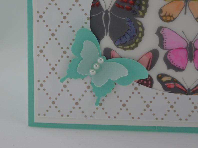 Schmetterlingsfenster 2