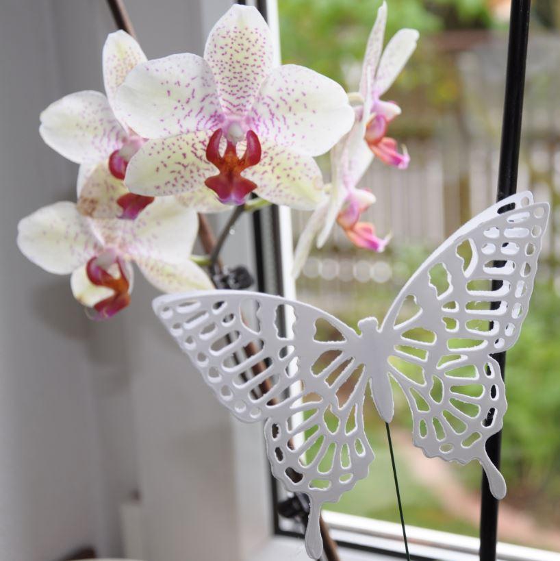 Orchideendeko 8