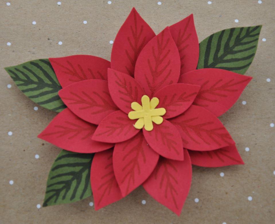 Blume Weihnachtsstern 2